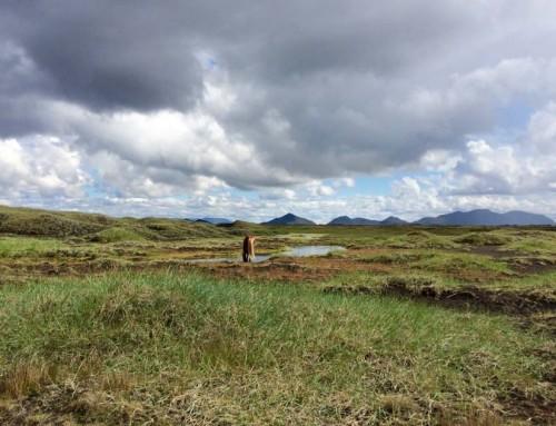 Sommerreittour in Nordisland